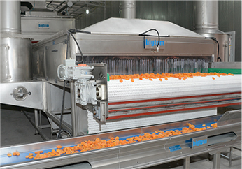 Dried Apricots Production | TÜRKEL